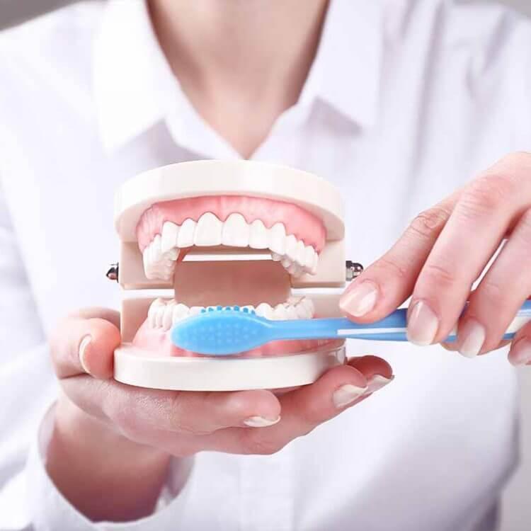 Dentist explaining dental health care
